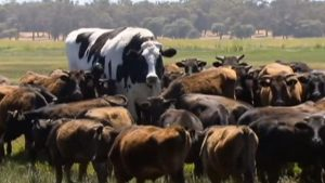 knickers_the_cow