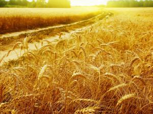 good-harvest