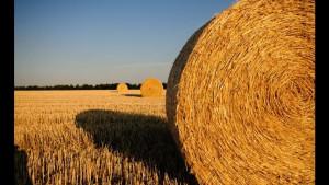 harvest bans