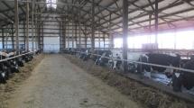 Žemės ūkZemes ukio naujienos, pieno ukis, zemes ukis, NMA parama