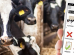 Pieno ūkis. Kaip gauti finansinę naudą iš bandos informacijos?