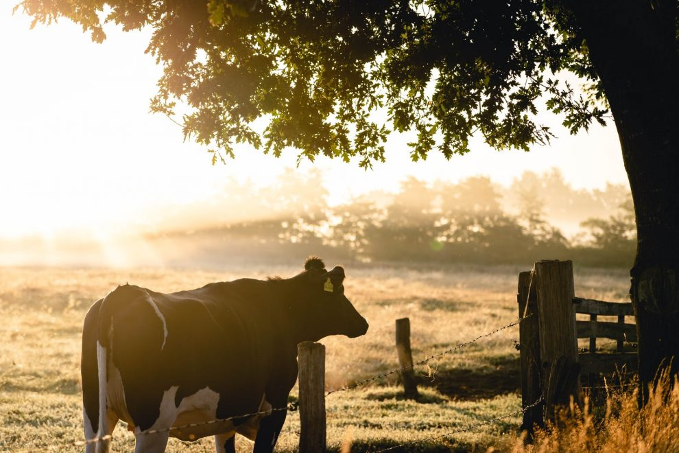 NMA parama, žemės ūkio naujienos, pieno ukis