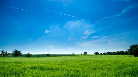 NMA parama, žemės ūkio naujienos, pasėlių deklaravimas