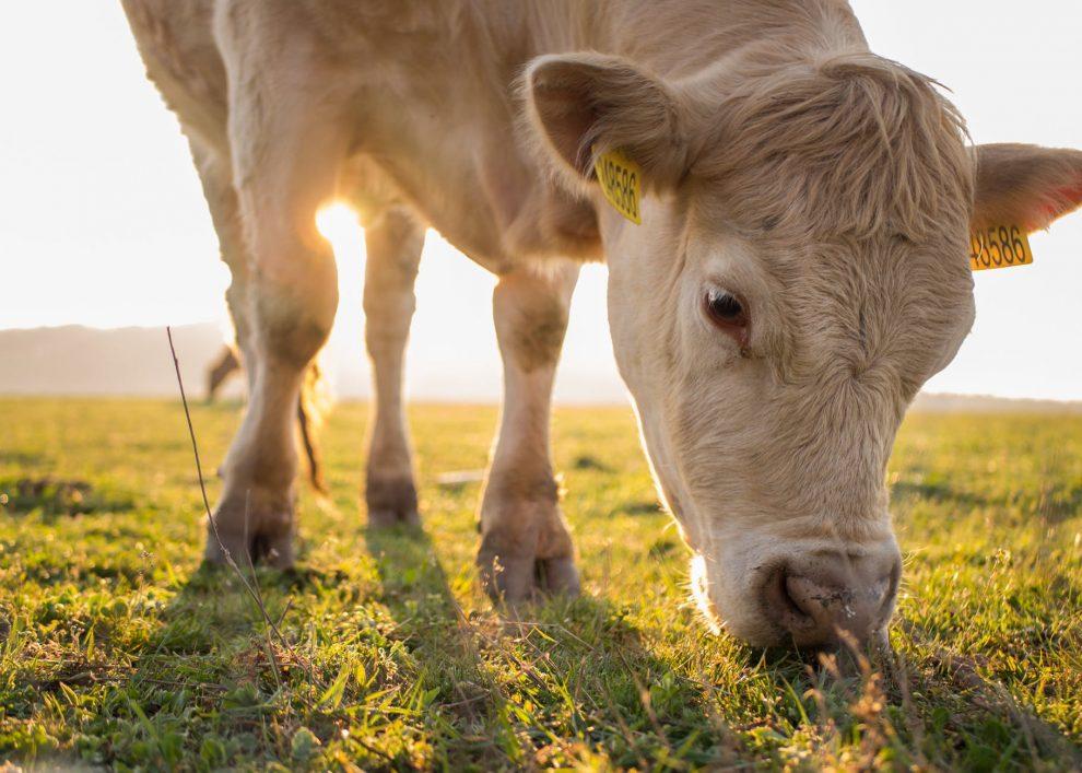 Pieno kaina, zemes ukio naujienos, pieno ukis