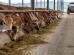 agroinfo, fermų statyba, rekenos, pieno ukis, zemes ukis