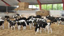 agroinfo, pieno ukis, fermu statyba