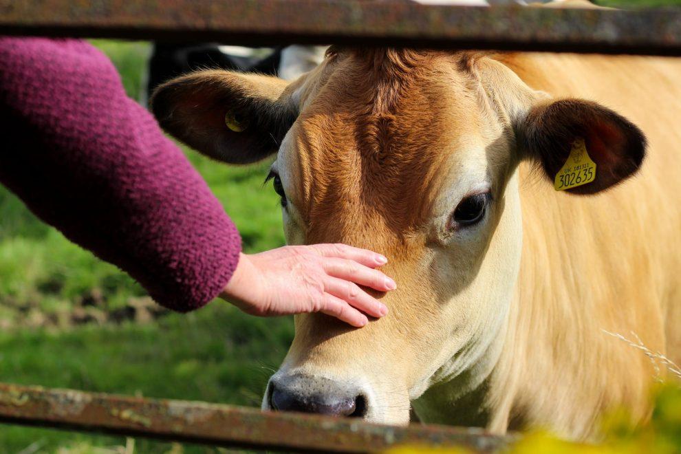 NMA parama, zemes ukio naujienos, pieno ukis