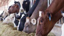 pasarai karvems, zemes ukio naujienos, pieno ukis