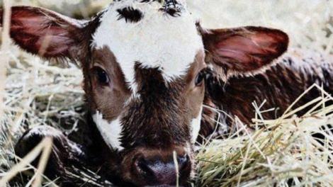 agroinfo, krekenos, pieno ukis, zemes ukis